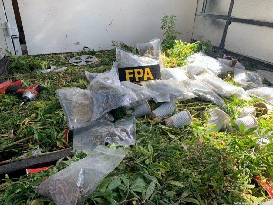 Tenían más de 200 plantas de marihuana en un motorhome