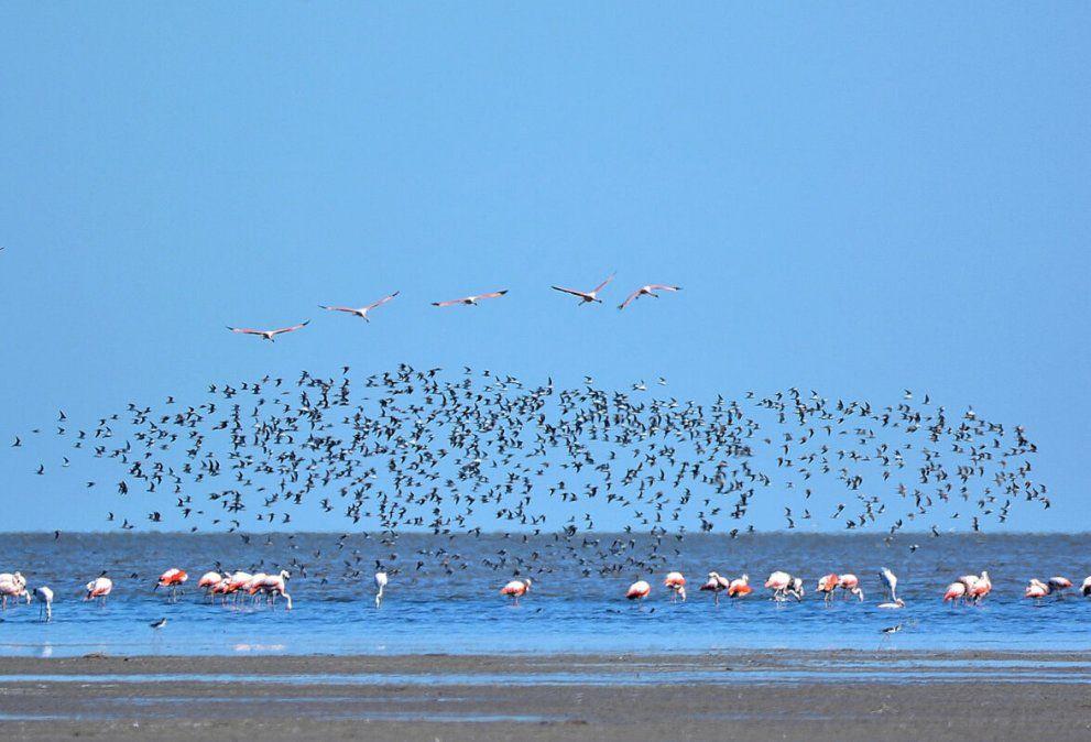 Aprueban proyecto para la creación del Parque Nacional Ansenuza